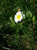 Verde de la flor Imagenes de archivo