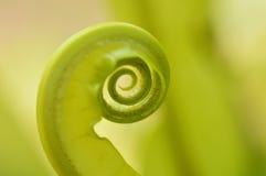 Verde de la fronda del helecho de árbol Foto de archivo libre de regalías