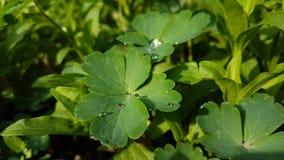 Verde de la hierba del resorte?, fresco y sano Fotos de archivo