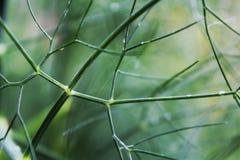 Verde de la hoja Fotografía de archivo libre de regalías