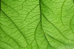 Verde de la hoja del fondo Foto de archivo libre de regalías