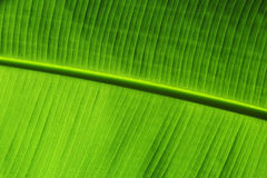 Verde de la hoja del fondo Foto de archivo