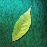 Verde de la naturaleza fotografía de archivo libre de regalías