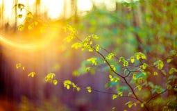 Verde de la naturaleza de la llamarada de la lente Fotos de archivo libres de regalías