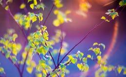 Verde de la naturaleza de la llamarada de la lente fotografía de archivo
