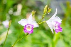 Verde de la orquídea y fondo del bokeh Foto de archivo libre de regalías