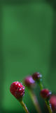 Verde de la rama del brote de flor de la orquídea Imágenes de archivo libres de regalías
