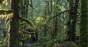 Verde de la selva Fotos de archivo libres de regalías