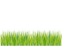 Verde de la silueta de la hierba, verano Imagen de archivo libre de regalías