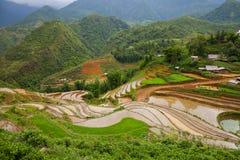 Verde de la terraza del arroz en la colina de la montaña situada en SAPA Vietnam fotografía de archivo libre de regalías