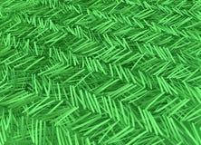 Verde de las agujas de la conífera Fotos de archivo libres de regalías