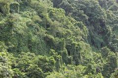 Verde de las montañas Fotografía de archivo libre de regalías