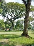 Verde de los árboles Fotos de archivo