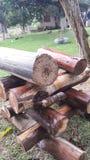 Verde de madera Fotos de archivo