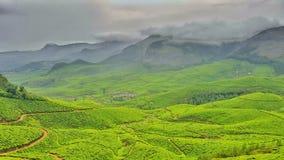 Verde de Munnar Imagens de Stock