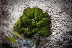 Verde de musgo Foto de Stock
