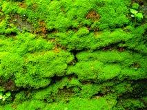Verde de musgo Imagen de archivo libre de regalías