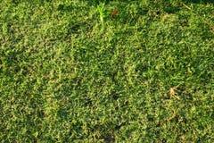Verde de refrescamento Fotografia de Stock