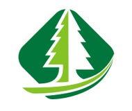 Verde dei pini Fotografia Stock Libera da Diritti
