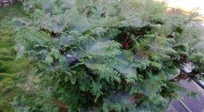 Verde del árbol Fotografía de archivo libre de regalías