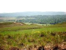 verde del Amazonas Venezuela de la sabana del parque del paisaje gran fotos de archivo libres de regalías