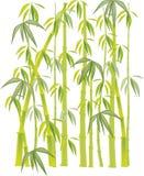 Verde del bambú Imágenes de archivo libres de regalías
