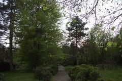 Verde del boschetto Fotografie Stock Libere da Diritti
