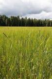 verde del campo Fotografia Stock Libera da Diritti
