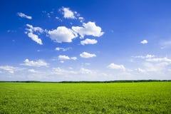 verde del campo Fotografie Stock Libere da Diritti