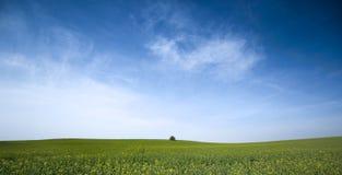 verde del campo Immagini Stock