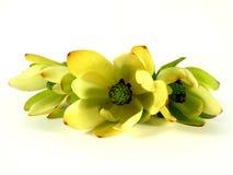 Verde del casquillo Foto de archivo