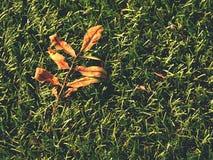 Verde del fútbol Final de la estación de fútbol Seque las hojas caidas en la tierra del césped plástico del fútbol Fotografía de archivo
