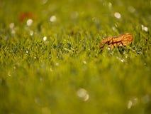 Verde del fútbol Final de la estación de fútbol Seque las hojas caidas en la tierra del césped plástico del fútbol Foto de archivo libre de regalías