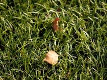Verde del fútbol Final de la estación de fútbol Seque las hojas caidas en la tierra del césped plástico del fútbol Fotografía de archivo libre de regalías