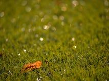 Verde del fútbol Final de la estación de fútbol Seque las hojas caidas en la tierra del césped plástico del fútbol Fotos de archivo
