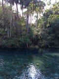 Verde del fiume Fotografie Stock Libere da Diritti