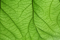 Verde del foglio della priorità bassa fotografia stock libera da diritti