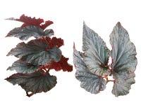verde del fondo del color de la hoja de las hojas aislado Imágenes de archivo libres de regalías