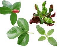 Verde del fondo del color de la hoja de las hojas de las verduras Imagen de archivo libre de regalías