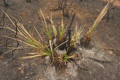 Verde del fuoco della primavera Fotografie Stock