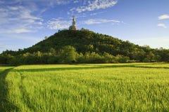 Verde del giacimento del riso Fotografia Stock