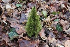 Verde del invierno Imagen de archivo