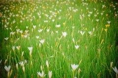 verde del jardín de flores Foto de archivo libre de regalías