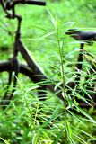 verde del jardín de la bicicleta Fotos de archivo