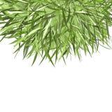 Verde del marco de la hierba para su diseño Imagen de archivo