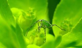 Verde del neón Imágenes de archivo libres de regalías