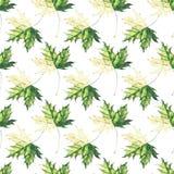 Verde del otoño y y florales herbarios blandos gráficos brillantes hermosos Imágenes de archivo libres de regalías