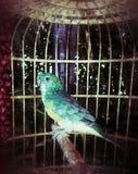 Verde del pájaro Fotografía de archivo