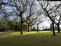 Verde del piso con los árboles Imagen de archivo