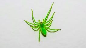 Verde del ragno Immagine Stock Libera da Diritti